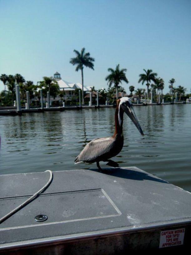 Derfor må du besøke Naples i Florida