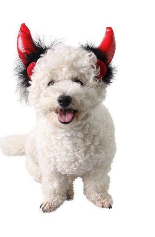 Djevelhorn - kostyme til hund og katt