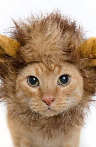 Løvemanke - Katt og liten hund