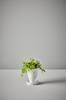 JADIE potte med skål - liten