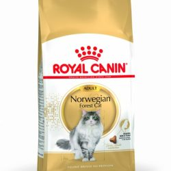 Royal Canin Norwegian Forest