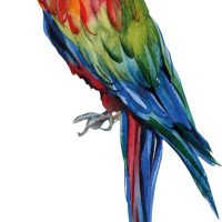 That's Mine Wallsticker Manuel The Parrot