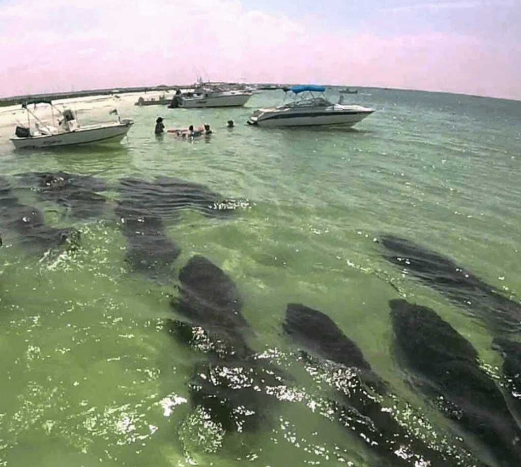 Ting å gjøre i Florida