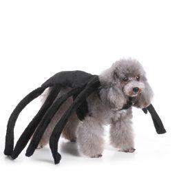 Edderkopp hundekostyme