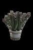 Agave plante H 38 cm
