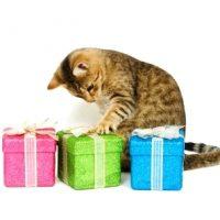 Forundringspakke til katt