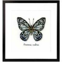 Bilde Blå sommerfugl