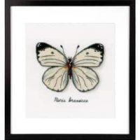 Bilde Hvit sommerfugl
