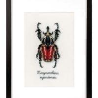 Bilde Rød bille
