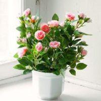 Kunstig plante Rose